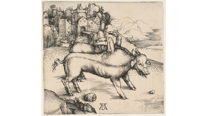 "Albrecht Dürer: The Deformed Landser Sow, 1496 | Rather than prophesying events, like the Oracle for example, the so-called prodigies were supposed to be random omens of impending doom or the apocalypse. These omens were usually inexplicable events such as meteor strikes or deformities. In the time of Albrecht Dürer, belief in prodigies was common, as there was an outbreak of syphilis in about 1480 that was seen to be a warning to mankind. Also in the decade after the birth of the Deformed Landser Sow, which Albrecht Dürer immortalized in 1496 in a copperplate engraving, numerous leaflets were distributed dealing with possible imminent disasters. In this way, the future made itself felt in the present.  Credit: adoc-photos / bpk  Work data: Albrecht Dürer (1471-1528): ""The sow of Landser"", 1496, copperplate print, 12 x 12,7 cm, location: Germanic National Museum Nürnberg"