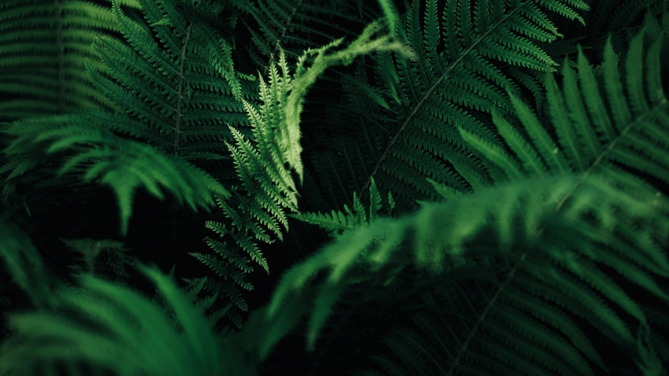 Ferns are ideal for planting on lower floors where the incidence of light is low. Just as they do in natural forests, these plants thrive in damp, shaded surroundings.